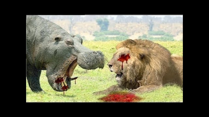 LIVE: The Best Attacks of Wild Animals World 2018 - Fight For The Survival of Wildlife