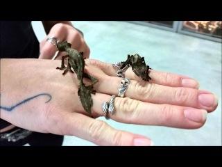 Satanic Leaf Tailed Geckos (Uroplatus phantasticus) at LLLReptile
