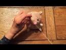 Игрушка-антистресс Хома - подробный урок с выкройками!