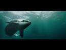 Маяк китов El faro de las orcas 2016 Official Trailer HD