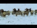 BBC Жизнь млекопитающих 05 Плотоядные Познавательный природа 2002