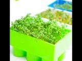 Как прорастить кресс-салат без земли в конструкторе LEGO (три способа).