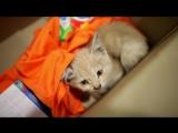 Благотворительный фонд помощи животным «Подбери друга» и Hill's меняют жизнь к лучшему. Серия 3