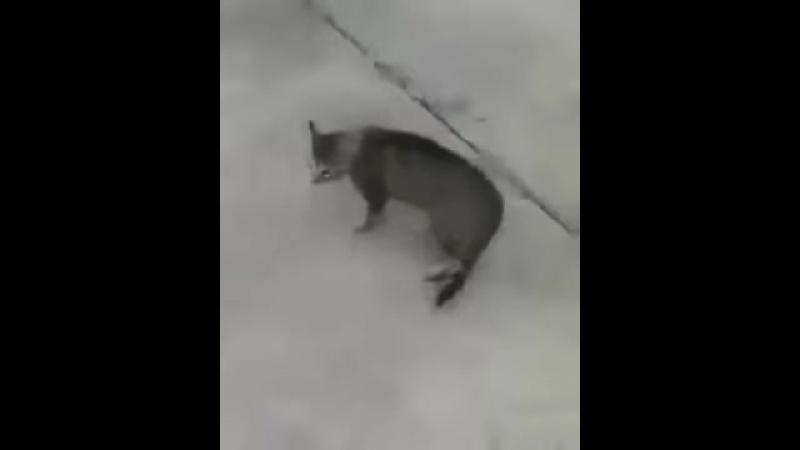 Парень разбивает кошачий бой лаем.