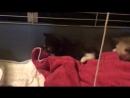 Слепой котенок. 6 день.2.