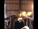 В Колорадо сняли огнедышащую альпаку