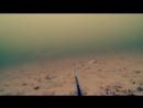 Реакция Окуня на Малька Атака на Живца Рыбалка и Подводная съемка
