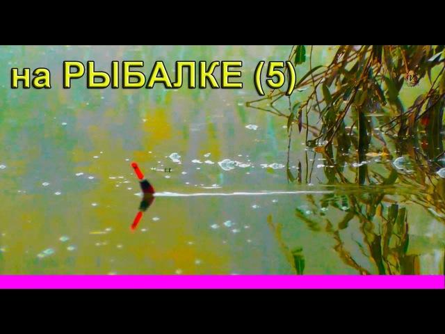 на РЫБАЛКЕ- видеозарисовки(5) Underwater, fishing. Рыбалка. Ловля на поплавочную удочку.