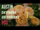 Буйство английских роз в питомнике AUSTIN Эпизод 1