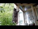 Веселые бои кошек и собак Приколы с кошками - Июль 2015