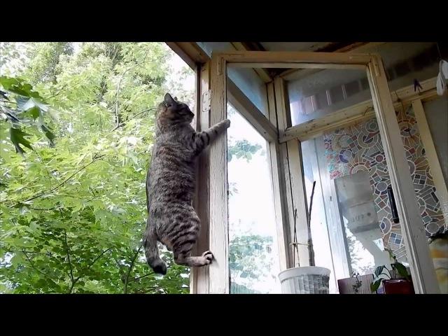 Веселые бои кошек и собак | Приколы с кошками - [Июль 2015]