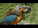 FUNNY PARROTS Funny BIRD Videos Compilation