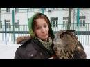 Не гладь сову! Это плохо! Совы не любят, когда их трогают.