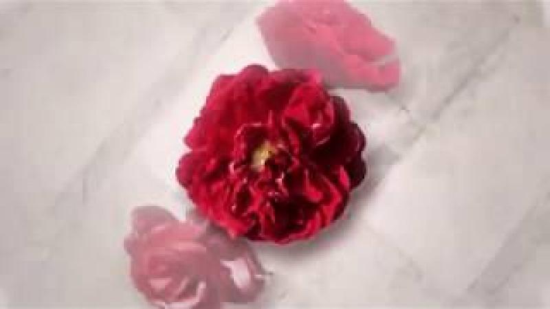 С праздником, милые женщины, с 8 марта С днем весны, женской красоты, нежности и радости