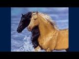 Lesley Harrison (лошади)