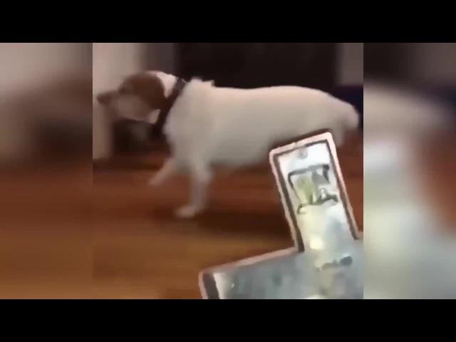 Evil dog || Одержимая псина