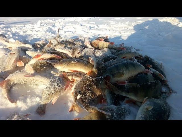 Рыбачим на протоке, ловим окуня! Якутия Yakutia