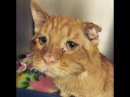 ★ Приютского кота никто не забирал завтра его ждало усыпление но…