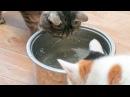 Аномальные морозы Сибири замерзла вода в помещении приюта для животных cats and dogs are freezing