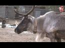 В добрых руках. Симбирский центр спасения диких животных начинает новую жизнь