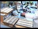 Возделывание лекарственных растений © Cultivation of medicinal plants
