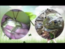 Frogs singing Native Faith