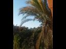 Чудесное теплое утреннее солнце сегодня в Александрии 🌞 Вы только послушайте пение местных птиц 🐦