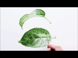 How to paint realistic luscious leaves in watercolour with Anna Mason
