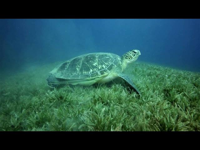 GoPro\ Red Sea turtle eating grass\ Egypt\ diving\ Dahab\ Египет\ Дайвинг в Дахабе\ Красное море