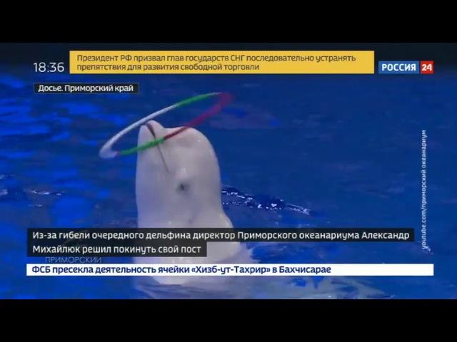 Новости на «Россия 24» • Директор Приморского океанариума ушел в отставку после смерти дельфина