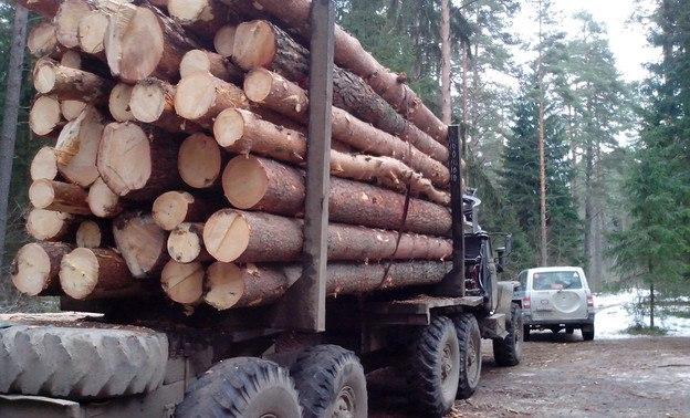 «Черный лесоруб» из Зеленчукского района пойдет под суд за вырубку леса почти на 400 тыс. руб.