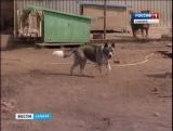 Всё чаще на улице оказываются породистые собаки