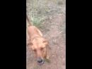 Собачий приют в Боровухе-2