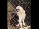 Ну очень злая собака (VIDEO ВАРЕНЬЕ)