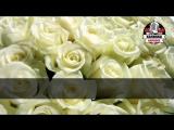 Юрий Шатунов - Белые розы (Караоке)