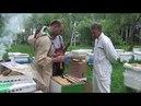 Продажа пчелопакетов бакфаст Алексею из Твери