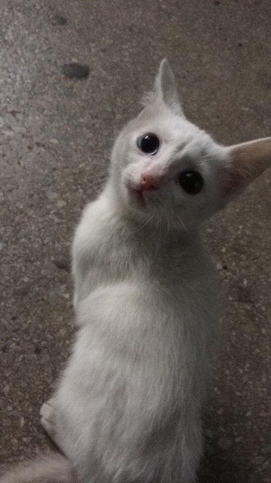 Нашли в подъезде этого голубоглазого котёнка.