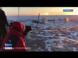 Встреча журналистов с белыми медведями в Арктике закончилась мирно