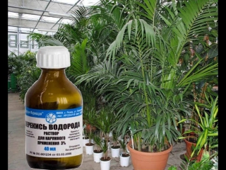 Перекись водорода для огородников