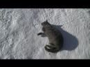 Котишка-вертишка