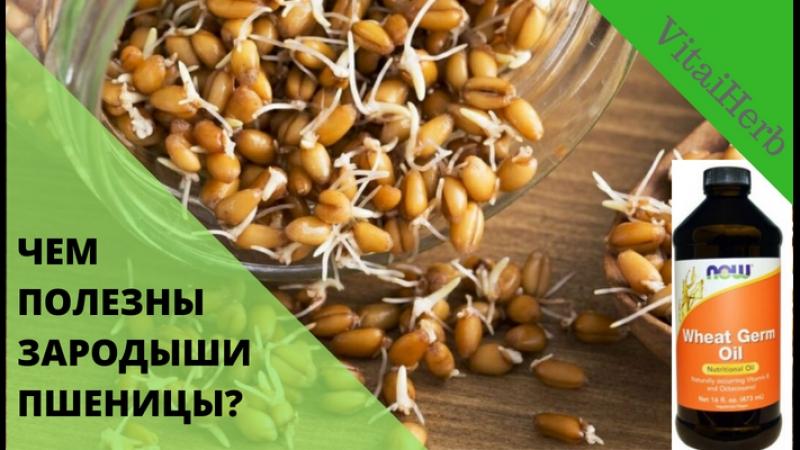 Пророщенная пшеница. Рецепты и советы