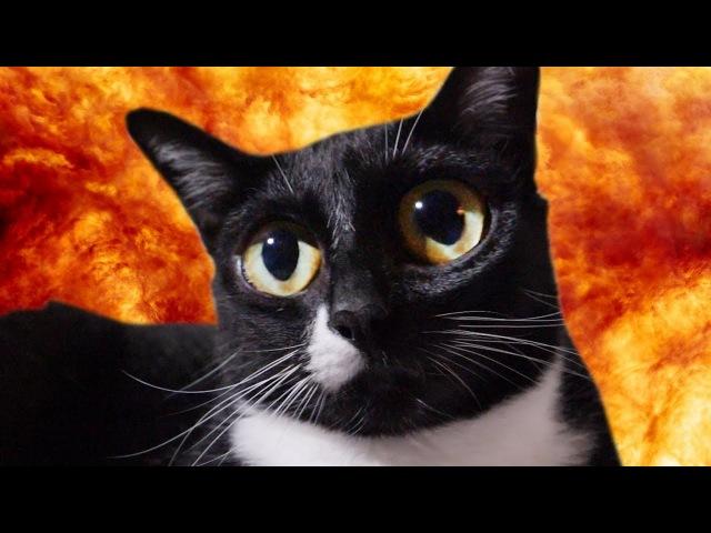 My Cat Has a Vietnam Flashback