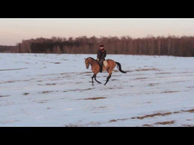 Ахалтекинец гуляет под казачью лизгинку— 720p