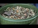 Бюджетная прикормка на карпа и амура\Кукуруза,люцерна,макуха,пшеница,пелетс