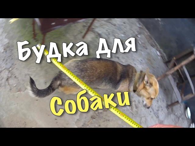 Будка для собаки нашей. Город Ставрополь. Иван Улыбашев.