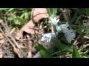клип природа кавказа