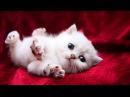Забавные и милые котята и кошки - Не смотри, если у тебя аллергия на милоту!