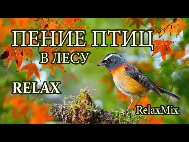 Релакс. Пение птиц в лесу/Relax. The birds singing in the forest