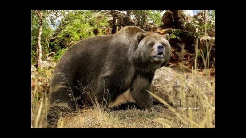 Эволюция. Медведь. От доисторического хищника до наших дней. Супер фильм.