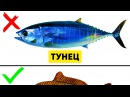 9 Видов Рыбы Которые Не Стоит Есть